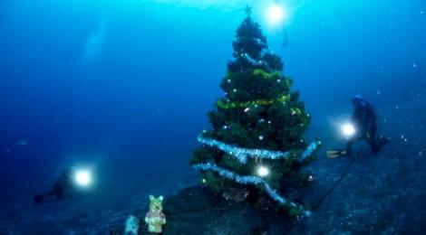 2012.11.27 クリスマスツリー