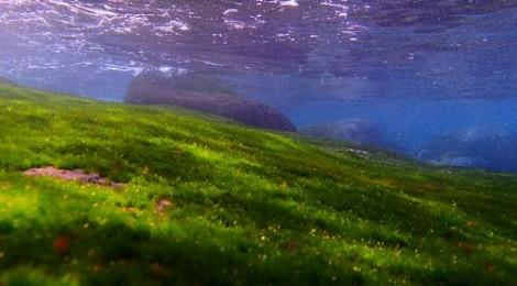 2012.11.23 青い水と緑の絨毯の季節に