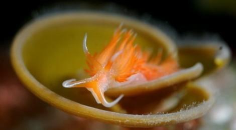 2013.2.15 浅場の海藻とコラボでウミウシを撮りましょう