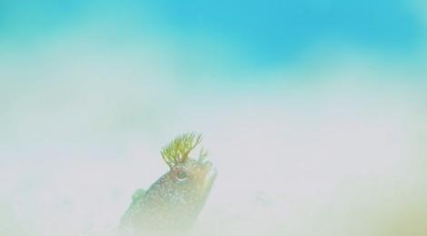 2013.7.2  海の中の夢