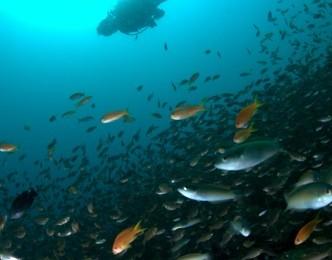 2013.8.22 湾内の魚影