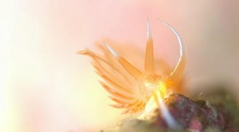2014.2.6 ウミウシはまさに海の宝石ですね。