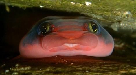 2014.5.5  衝撃的なツルウバウオの正面顔