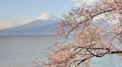 2015.3.24 桜と海と富士山