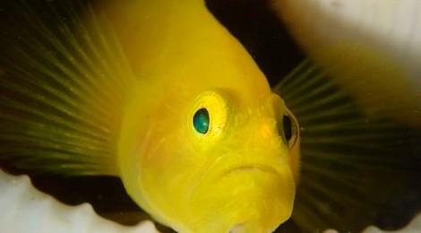 2015.9.1 幼魚いっぱい 貝殻ミジンも素敵♪