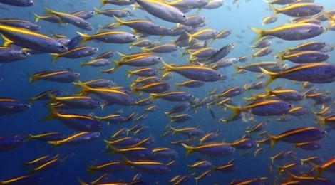 2015.10.8  タカベの群れ、青い海と空、ウミウシ31種