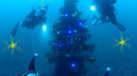 クリスマスツリー設置されました♪2016.11.21