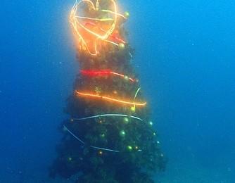 2017.12.14 世界初!?水深10mの海中イルミのクリスマスツリー♪